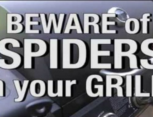 The Spiders and your grill – How to manage a sticky situation